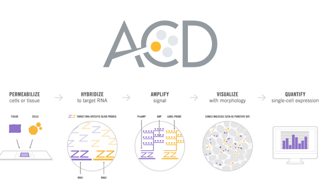 Advanced Cell Diagnostics raises $22 million USD in latest round of financing